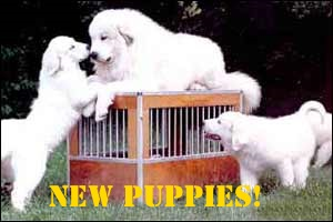 Click to see Puppies